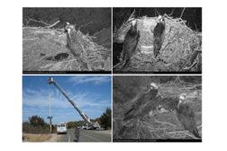 Thermal camera views of birds nest
