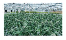 Cannabis operator deploys access control solution for 30 plus facilities