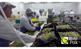 Elite Pak Asparagus FacilityWB.jpg