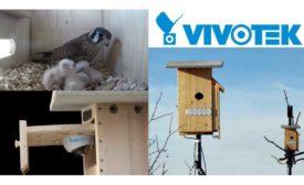 falcon nesting boxes
