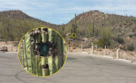 Dealers have devised some clever disguises for outdoor cameras â?? including hiding one inside a cactus.